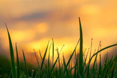 Green grass on  background the sky at sunrise