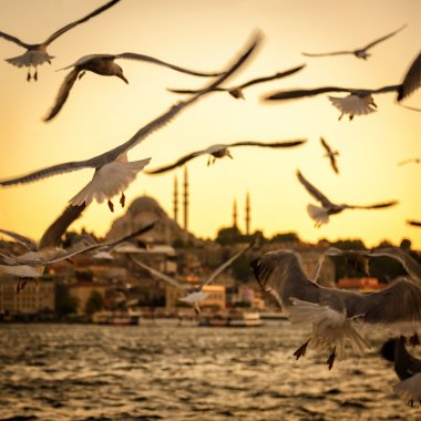 Seagulls over the Golden Horn in Istanbul at sunset