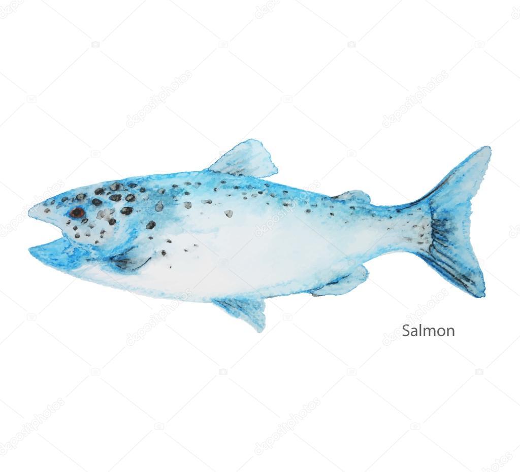 Pescado Salmón agua color — Vector de stock © mapichai #123214220