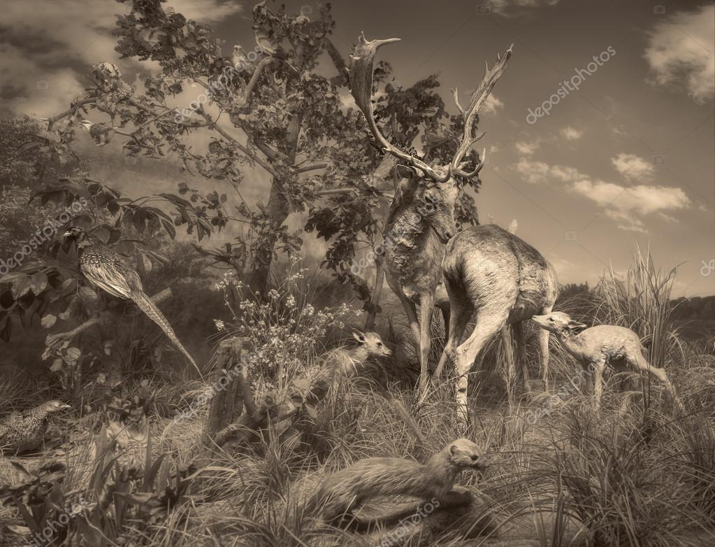 Wildlife scene