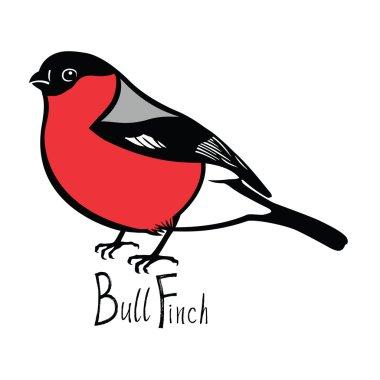 Birds collection Bullfinch Color vector