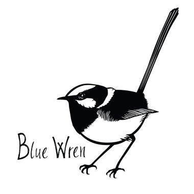 Birds collection Blue Wren Black and white vector