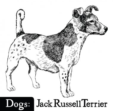 Dog Sketch style Jack Russell Terrier