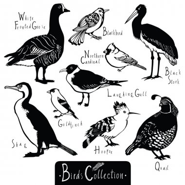 Birds collection Black Stork Goldfinch Laughing Gull Quail Hoopo