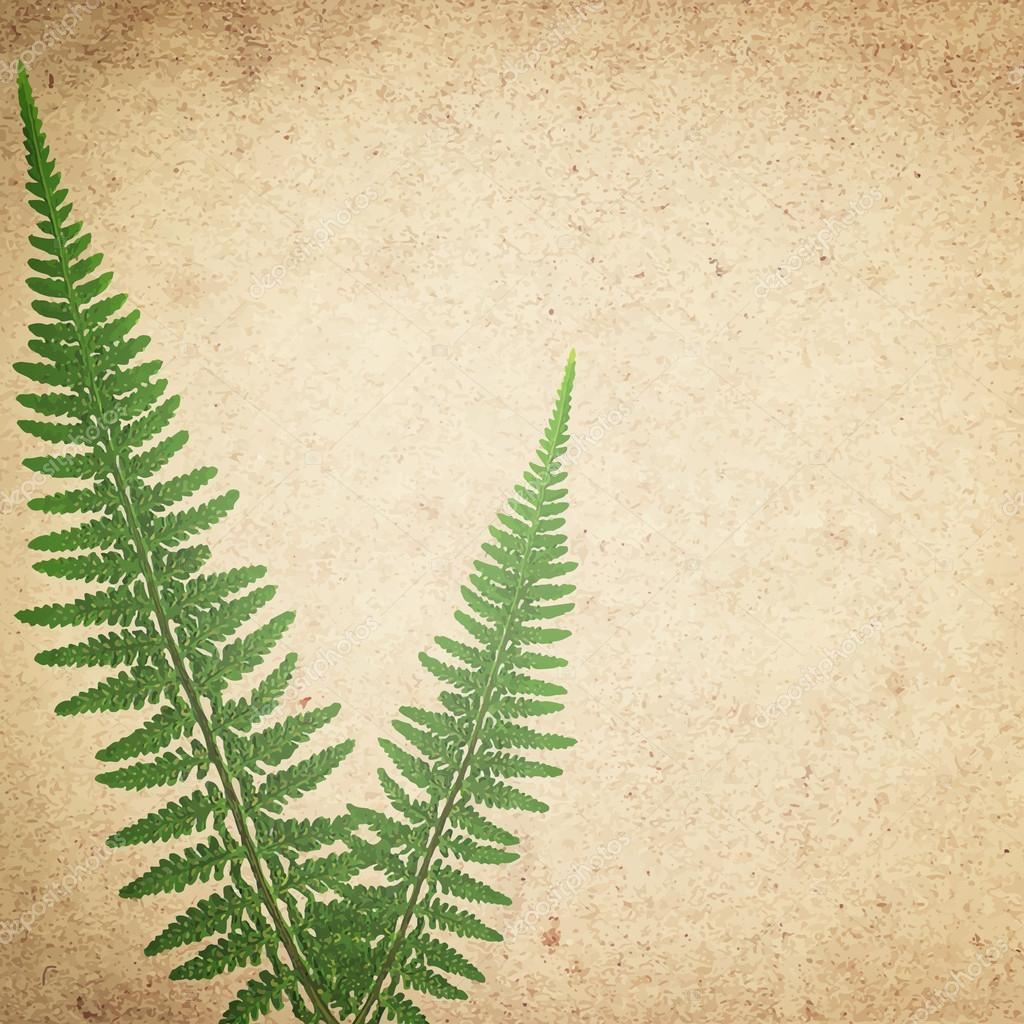 ld vintage paper texture background with green dry fern leaves
