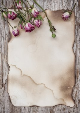 Dry roses on the old paper and wooden background