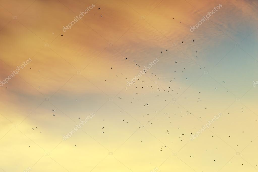 A flock of migratory birds in the sky.