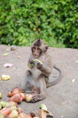 Thai monkey is eating fruits