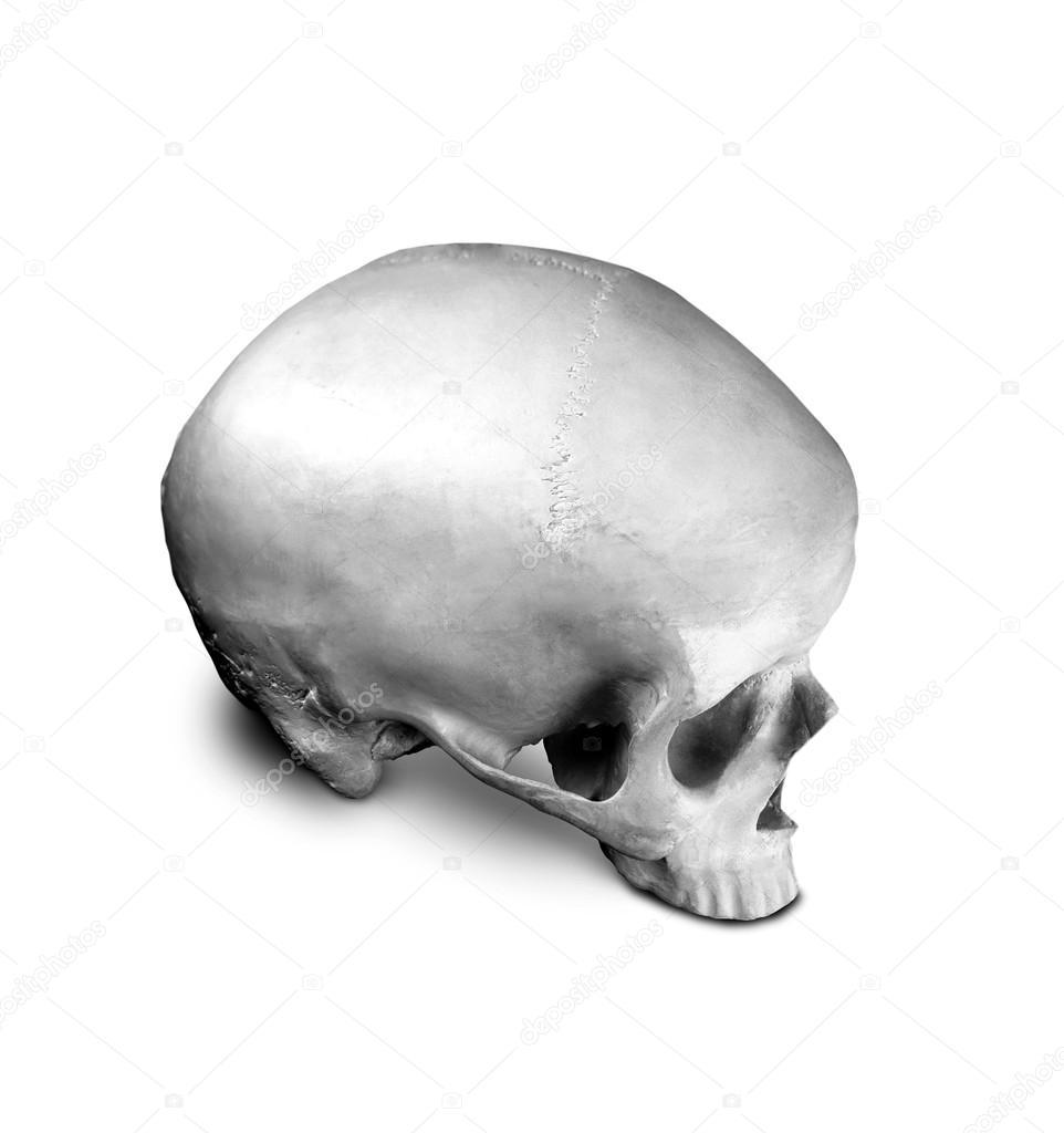cráneo humano Anatomía — Foto de stock © shutswis #92527432