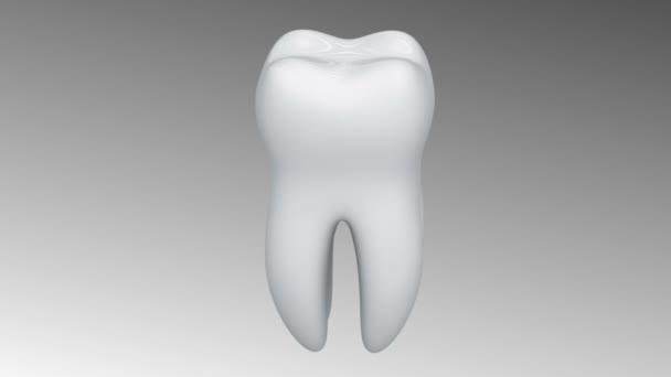 Zahn. Alpha-Kanal ist enthalten. Schleife.