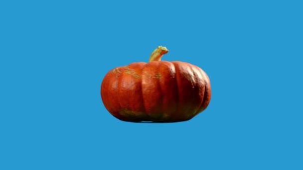 oranžová dýně rotující ve smyčce pohybu izolované na modrém pozadí