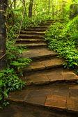 Kamenné schodiště do hlubokého lesa