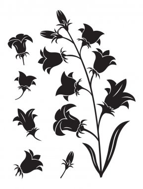 Bells flower silhouette on white background stock vector