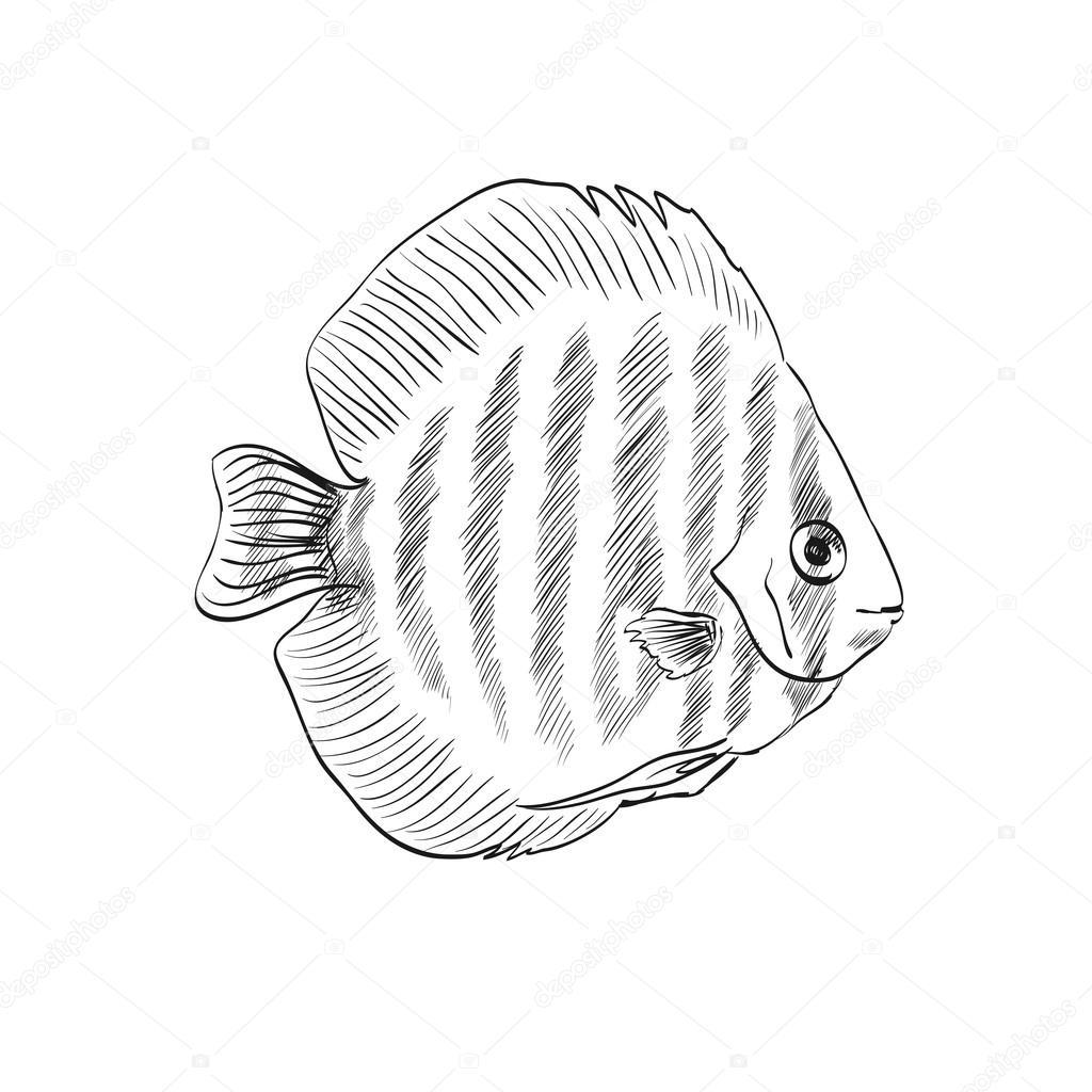 Sketch Of A Fish Stock Vector C Pilipa 53634523