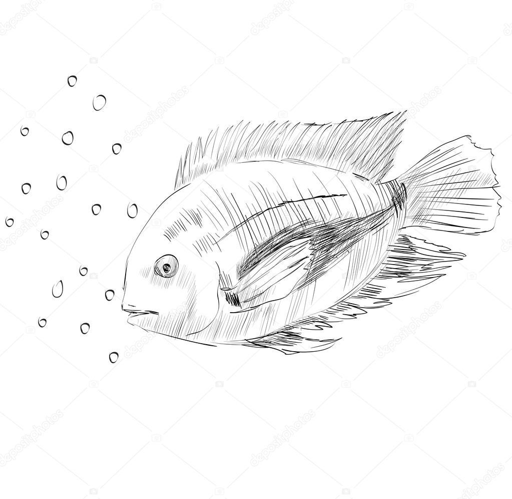 Sketch Of A Fish Stock Vector C Pilipa 53990029