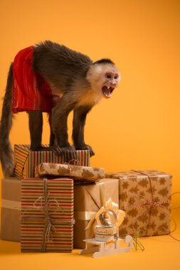Monkey with Christmas gift boxes