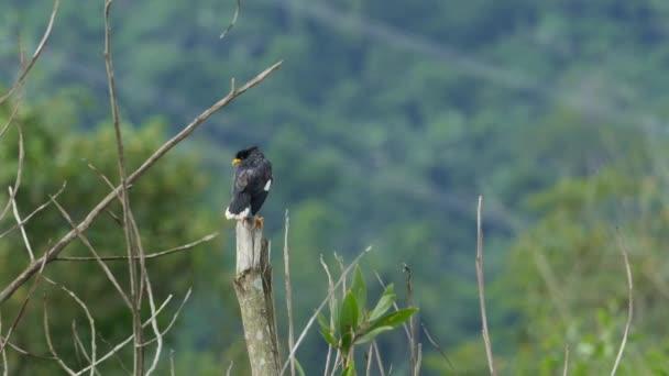 Pták Preening