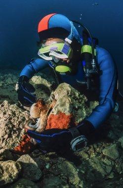 küçük ahtapot ve Adriyatik Denizi'nde dalgıç