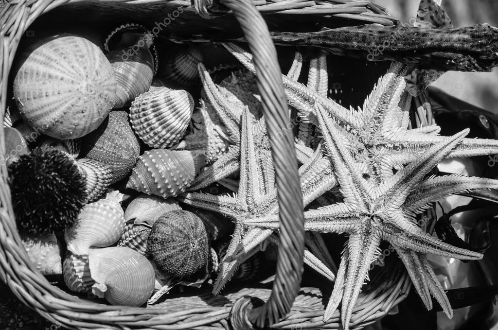 étoile de mer séchés et oursins — Photographie agiampiccolo © #53805447