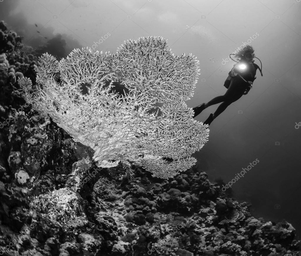 Фотообои Staghorn coral and a diver