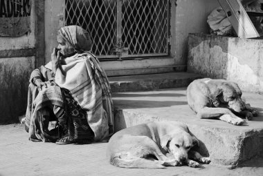 indian woman and dogs at the Uttar Pradesh market