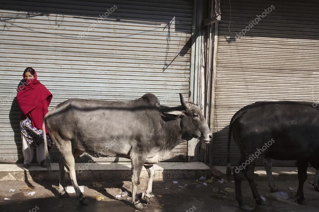 Indiánka zdarma v Dillí
