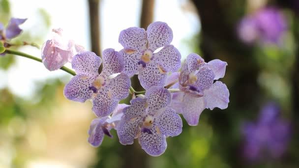 krásná orchidej