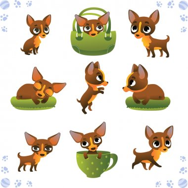 Set of cute dogs: breed of chihuahua