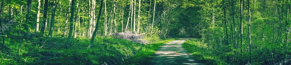 Фотообои Idyllic green forest with a road