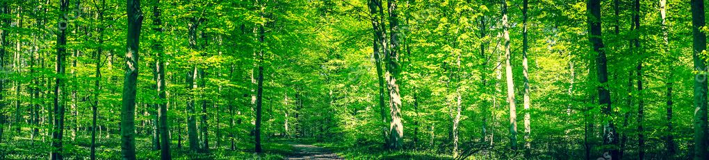 Фотообои Green forest panorama in the spring