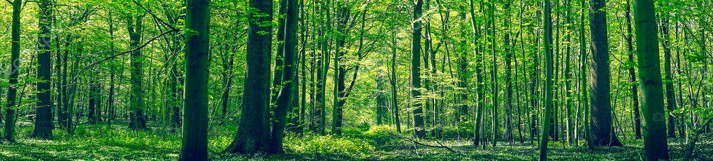 Фотообои Green forest panorama scenery