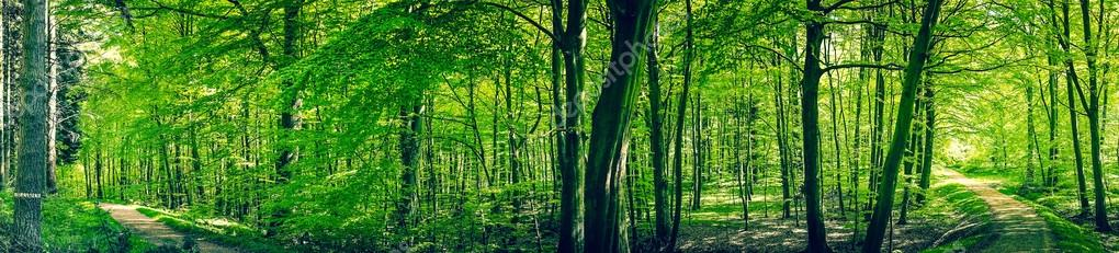 Фотообои Roads in a green forest panorama