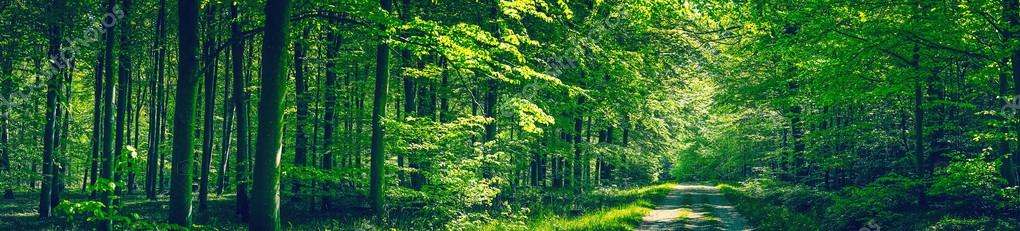 Фотообои Trees by a road in a green forest