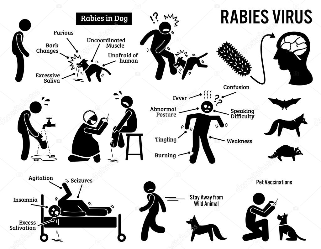 rabies virus in human and animal stick figure pictogram
