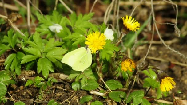 Motýli z Německa