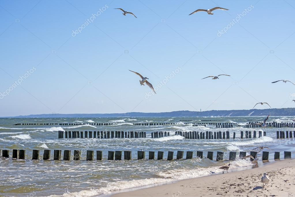 Baltic Sea with groins and sea gulls