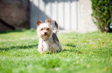 small mutt dog in the yard