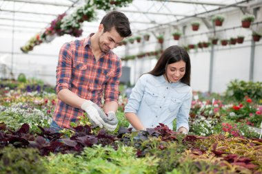 Gardening people, Florist working with flowers in greenhouse