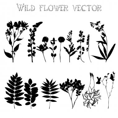 Set of silhouettes of wild flowers and leaves on a white background vector clip art vector