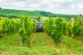 Tractor working in the vineyard