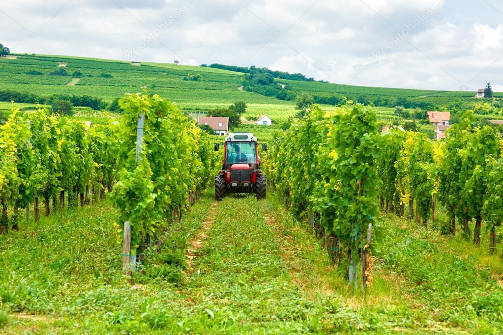 Tractor working in the vineyard