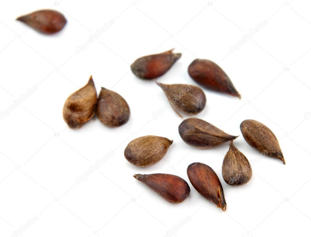 Apple Seeds  U2014 Stock Photo  U00a9 Petrop  59229639