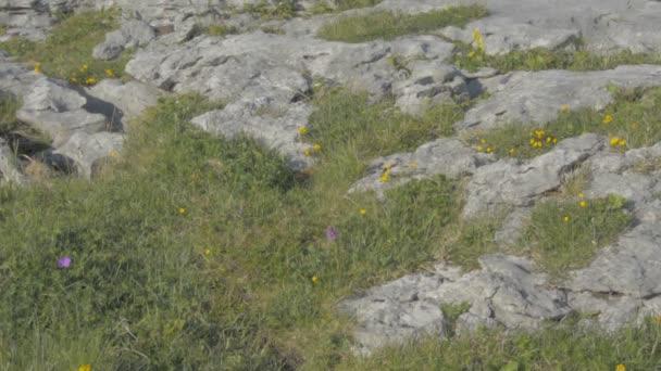 Slavný Burren národní Park krajina v hrabství Clare, Irsko - ploché video profil