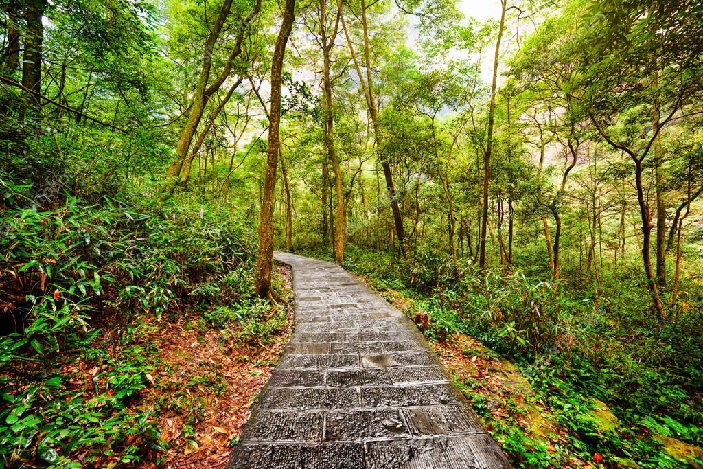 Scenic stone walkway across green woods. Summer landscape