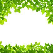 Fotografie green leaves border on white background