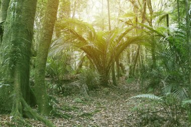 Sunlight shining in tropical jungle stock vector