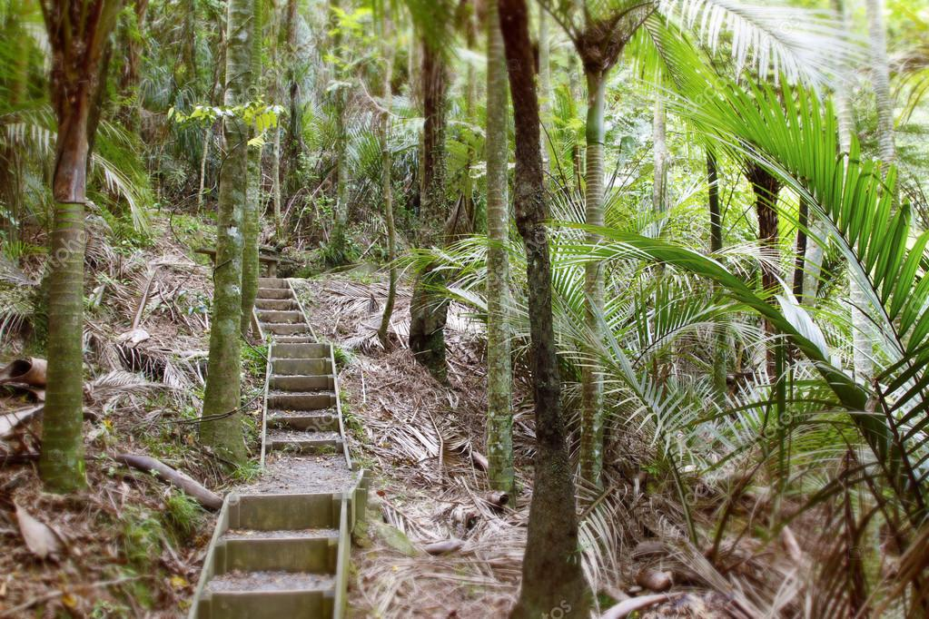 Walking trail in jungle