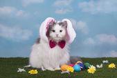 Katze in der Anzug-Bunny feiert Ostern