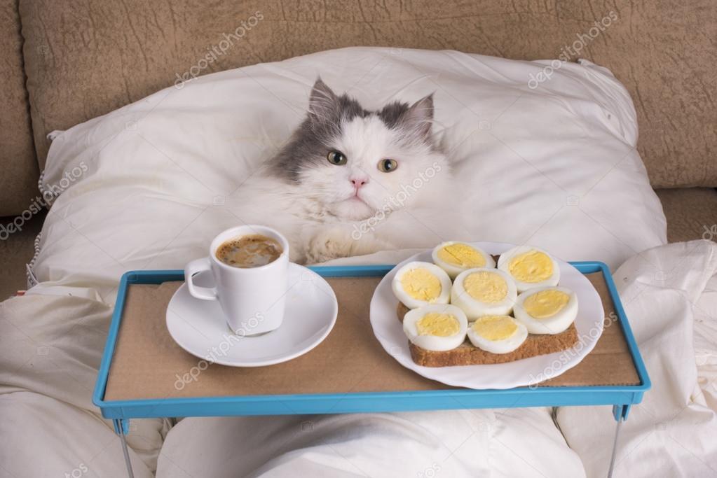 Года сыну, картинка доброго утра лисы смешная с завтраком