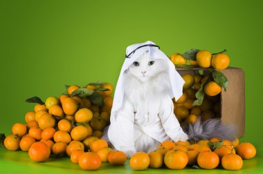 cat in costume Sheikh sells tangerines